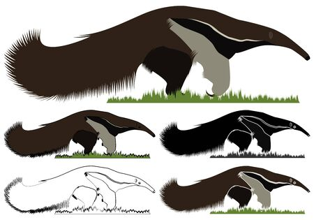 Giant Anteater flag in front view
