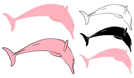 Pink dolphin in front view