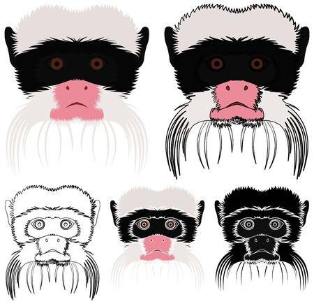 Saguinus imperator monkey in face view Ilustração