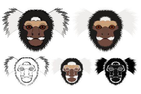 common marmoset monkey in face view Ilustração