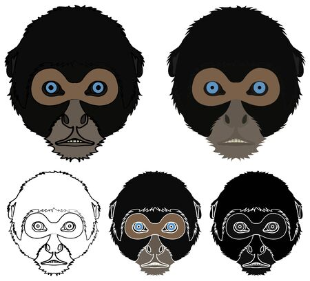 Spider monkey face view colored