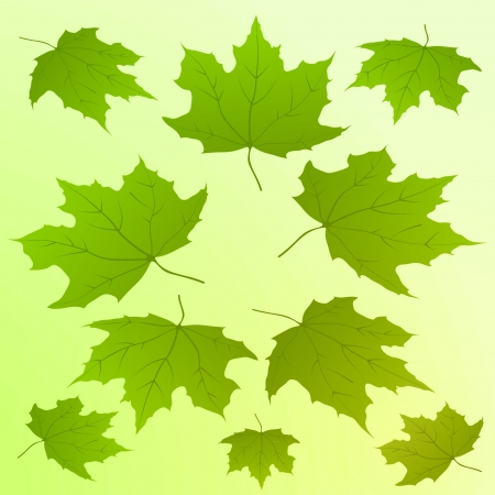 green colored  maple leaves card illustration vector backdrop Vector