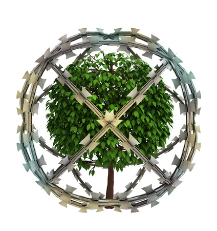 protected tree: isolated protected tree in barbed sphere fence illustration Stock Photo