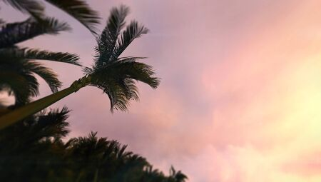 Sundown sky with tropical palm trees seen from below, tropical summer destination as 3D illustration copy space background Stockfoto - 125550581