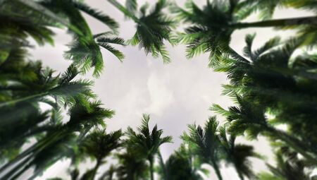 Deep tropical rain forest seen from below with palm tree vegetation, tropical summer destination as 3D illustration copy space background Stockfoto - 125550587