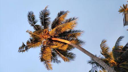 palm tree at sunset