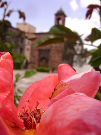 colonial building: Flower in front of a colonial building