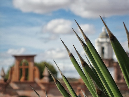 whitespace: Agave in front of a colonial building Stock Photo
