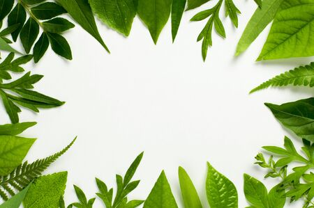 Tropical leaf and herbs frame border with a middle blank space for a text, logo, or product designs. Flat lay. Overhead close up shot – image