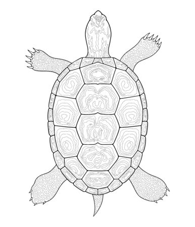Diamondback Terrapin turtle outline. Black and white illustration. Top view, Isolated turtle on white background