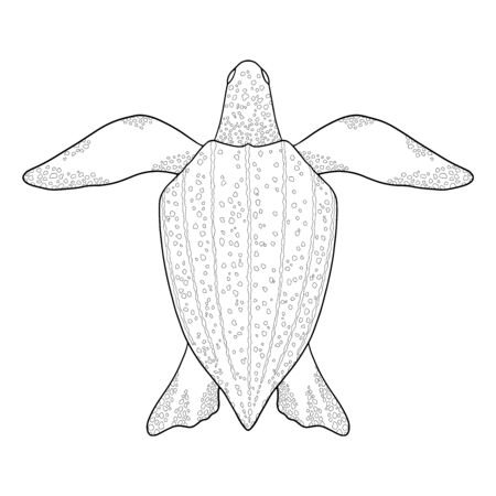Leatherback Sea turtle outline. Black and white illustration. Top view, Isolated turtle on white background 일러스트