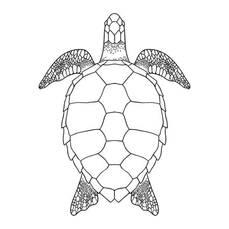 Sea turtle outline. Black and white illustration. Top view, Isolated turtle on white background