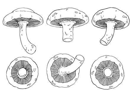Shiitake mushrooms illustration. Set of 6 hand drawn mushrooms. Black and white detailed outline drawing. Vector illustration.