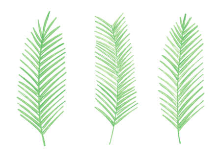Green watercolor palm leaves. Set of 3 watercolor palm leaves. Vector illustration isolated on white background.