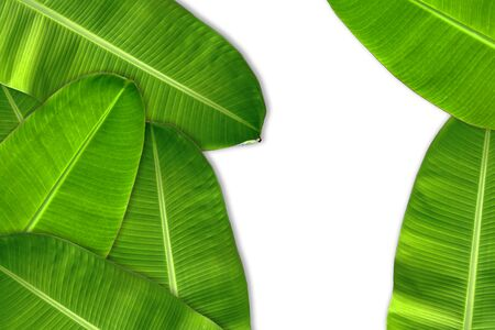 Fresh green banana leaves stacked into the background. Have a blank space for text input.