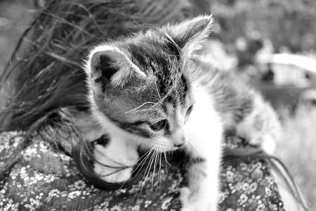 Bueatiful baby cat on shoulder owner photo