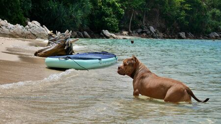 Dog next to a stand up paddle in Thailand