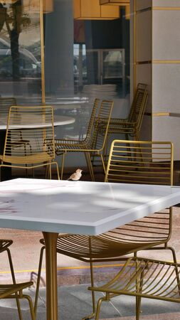 sparrow bird on marmor table with golden chairs in Singapore Reklamní fotografie