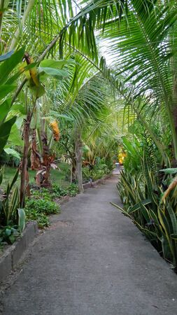 The path leads to a to a jungle garden