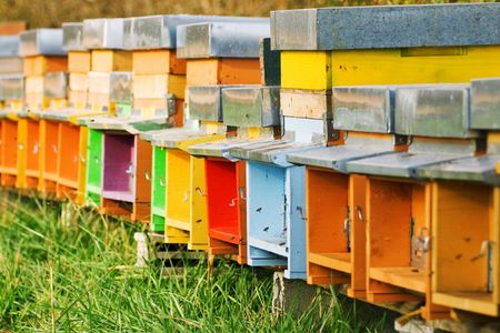 A long line of coloured beehives in the middle of a meadow
