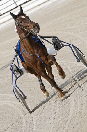 Trot horse riding in a race track Stock Photo