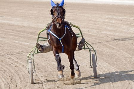 horse harness: Trot horse riding in a race track Stock Photo