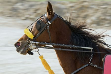 rein: Riding horse in harness racing