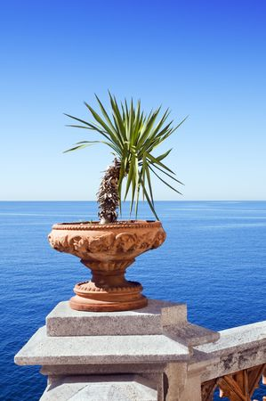 View of sea from a terrace with plant