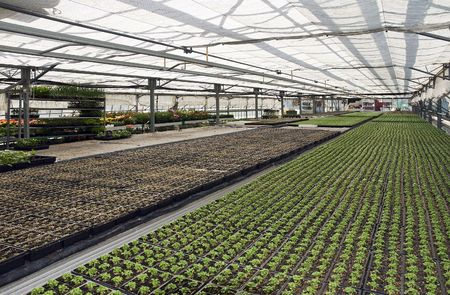 Lines of small plants in a greenhouse