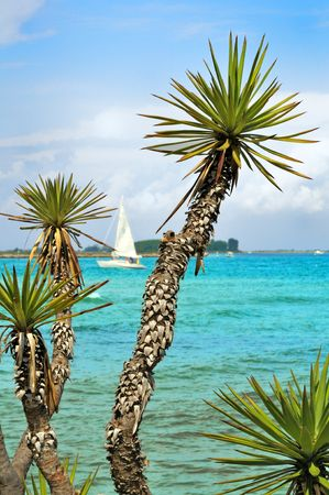 View of plants against the sea with a sailboat Stock Photo