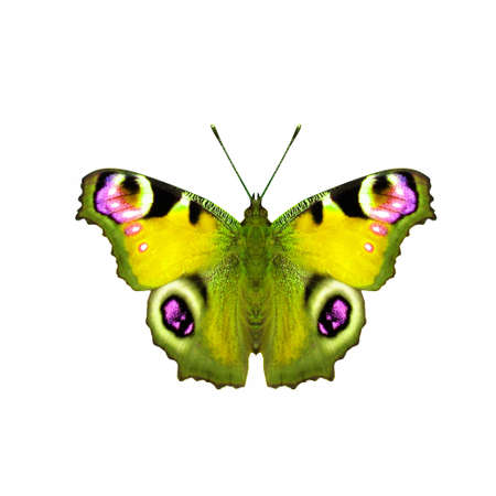 Butterfly Stock Photo - 4216896
