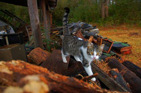 Wandering kitten Фото со стока