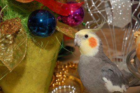 Kerstmis vogel