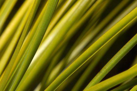 smooth: Smooth Pine