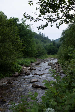 Beautiful picturesque river in the middle of the forest 免版税图像 - 152799987