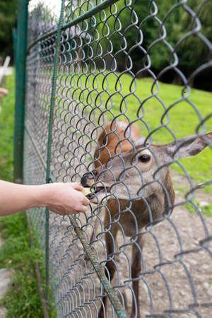 Man feeding deer in the reserve
