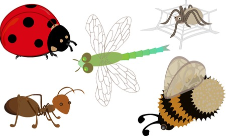 Cute cartoon insects: a ladybird, ant, dragonfly, bumblebee and a spider on his web Vector
