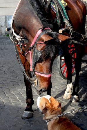 an english bulldog meeting a horse