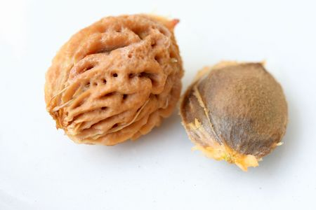 apricot kernels: two kernels of an apricot and of a peach Stock Photo