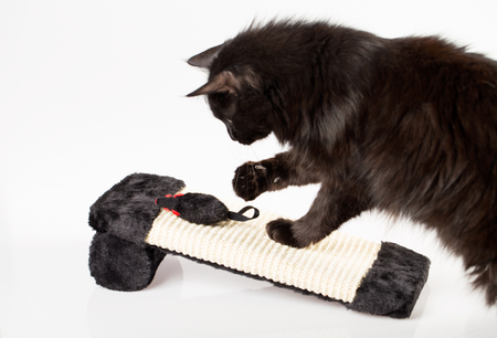 Sweet black cat playing with a mouse toy