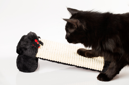 Black cat playful with a mouse toy