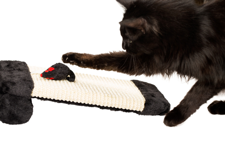 mouse: Cat hunting a black mouse