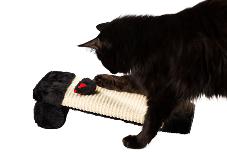 Sweet black cat playing with a toy mouse