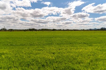 Scenes from an irrigated rice plantation, with already effective germination and water occupying the full extent of the crop. Agricultural production management in southern Brazil. Production of food for consumption.