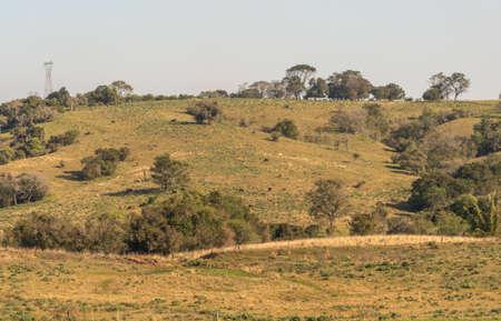 cattle breeding area extensino in the south of brazil. View of rural farm farm in the city of Sao Vicente do Sul, state of Rio Grande do Sul, Brazil. Imagens