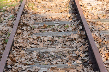 The train tracks and on them scattered several leaves of the plane trees. End of the fall season. Bucolic landscape.