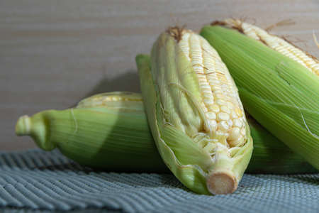 Corn cobs (Zea mays). Brazilian delicacy. June party food. Brazilian cuisine dish cooked green corn. Sweet corn. Ingredient to make curu and mush.