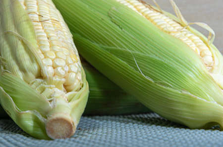 Corn cobs (Zea mays). Brazilian delicacy. June party food. Brazilian cuisine dish cooked green corn. Sweet corn. Ingredient to make curu and mush. Stock fotó