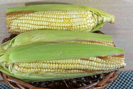 Cobs and green corn. Food for human consumption. It can be eaten boiled or baked, in the form of a curacao, juice and also as an ingredient in cakes, cookies, ice cream, pamonhas and other foods.