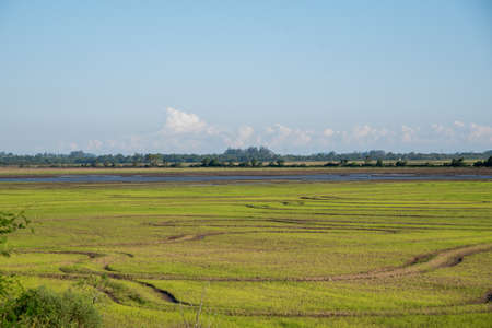 Flooded rice floodplain with defined contours and germinating. In the background, the horizon and the rural landscape of an agricultural production area in southern Brazil. Banco de Imagens